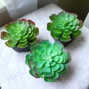 Potted Faux Succulent Plant Decor Includes 3
